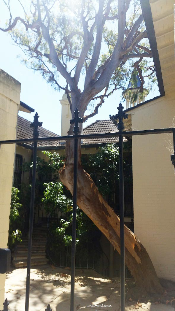 Love the tree saving at Wolseley Road, Point Piper